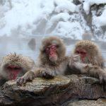2018-01-16 寒冬浸溫泉或致「熱休克」 日每年萬人喪命