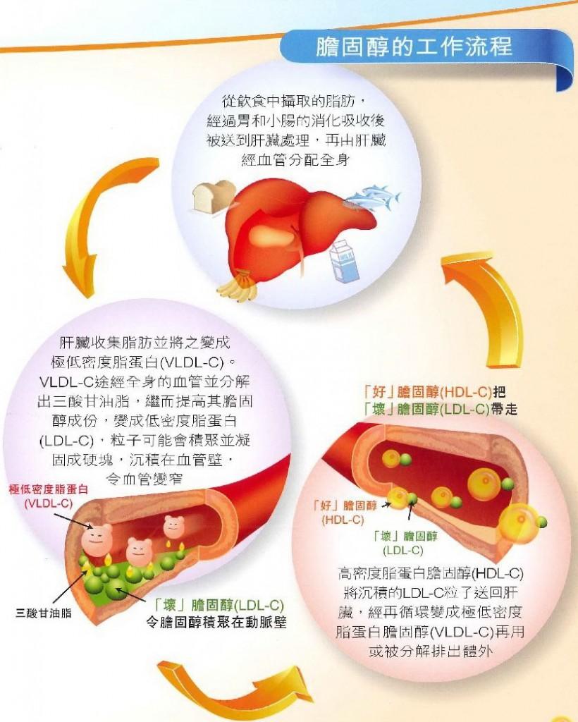 膽固醇的工作流程