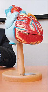 ■心血管病患者有年輕化趨勢,而且出現第二次病發的比例亦十分高。資料圖片