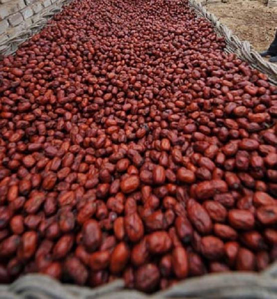 紅棗。新華社圖片