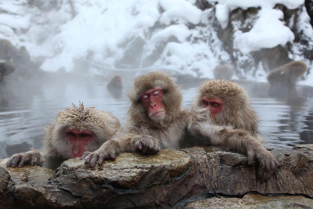 寒冬浸溫泉或致「熱休克」,日本每年逾萬人喪命。網上圖片