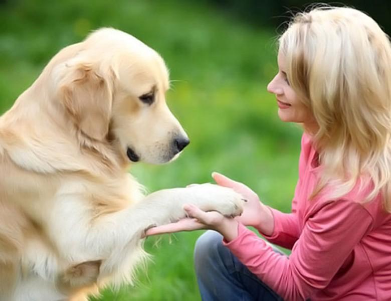 研究指養狗的人壓力會比較小,能降低罹患心臟病的風險。(互聯網)