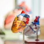 心臟衰竭|本地最新調查顯示心衰竭年輕化 五年內死亡率比乳癌高